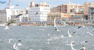 عناوين أشهر مطاعم أسماك فى بورسعيد